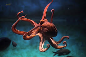 Shed More Light On Synonym sea creature words merriam webster