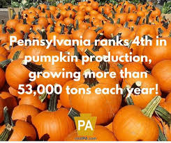 Pumpkin Patch Indiana County Pa by 235 Best You Know You U0027re From Pa When Images On Pinterest