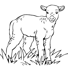 Winsome Design Goat Animal Coloring Pages Baby Lamb Page Color A Sheep