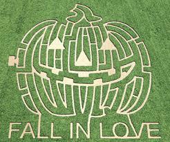 Mayfield Pumpkin Patch by Corn Maze Craze Continues Times Free Press