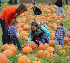 Caledonia Pumpkin Patch by 11th Annual Pumpkin Festival Cedar Circle Farm E Thetford Vt In