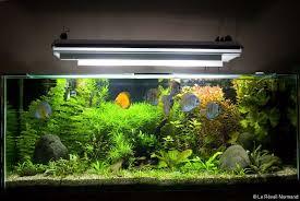 poisson eau douce aquarium tropical poissons tropicaux d eau douce actu fr
