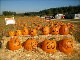 Kingsway Pumpkin Farm Hours by Bi Zi Farm Corn Maze And Pumpkin Patch Ideas For Pumpkin Patch