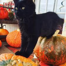 Pumpkin Patch Northwest Arkansas by Drewry Farm U0026 Orchards Home Facebook