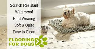 Best Type Of Flooring For Dogs by Best Flooring For Animals 43 Images What Is The Best Hardwood