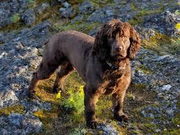 Blue Heeler Lab Mix Shedding by Dog Breeds That Live The Longest Business Insider