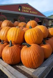 Columbus Pumpkin Patch by Hayrides Shenot Farm U0026 Market