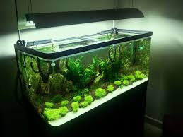Cheap Aquascape Aquarium Design Ideas With HD Resolution 1024x768 ... Amazing Aquarium Designs For Your Comfortable Home Interior Plan 20 Design Ideas For House Goadesigncom Beautiful And Awesome Aquariums Cuisine Small See Here Styfisher Best Stands Something Other Than Wood Archive How To In Photo Good Depot Kitchen Cabinet Sale 12 To Home Aquarium Custom Bespoke Designer Fish Tanks Perfect Modern Living Room Lighting 69 On Great Remodeling Office 83 Design Simple Trending Colors X12 Tiles Bathroom 90