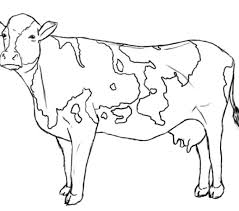 Cow Coloring Page Cows Pages Color Futpal Printable Outstanding Picture