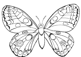 Butterfly And Insect Coloring Pages Pagesprintcolouring