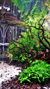 386 Best Planted Tank Images On Pinterest | Aquarium Aquascape ... Aquascape Of The Month June 2015 Himalayan Forest Aquascaping Interesting Driftwood Placement Aquascapes Pinterest About The Greener Side Aquascaping Design Checklist Planted Tank Forum Simons Blog Decoration Bring Nature Inside Home Ideas Downhill By Arie Raditya Aquarium 258232 Aquaria Creating With Earth Water Fire Air Space New Aquascapemarch 13 2016page 14 Page 8 Aquapetzcom Magical Youtube 386 Best Tank Images On Aquascape