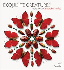 2017 Exquisite Creatures The Insect Art Of Christopher Marley Wall Calendar 9780764973079 Amazon Books