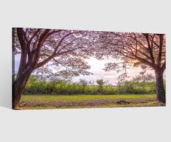 leinwandbilder 1tlg affenbaum baum wald landschaft leinwand bild bilder wandbild leinwandbild wohnzimmer gerahmt 9ab4255 wandtattoos und