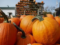 Pumpkin Farm Clarence Ny by Great Pumpkin Farm Greatpumpkinwny Twitter