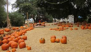 Pumpkin Patch With Petting Zoo Inland Empire by Wickerd Farm Pumpkin Patch Open For Fun Menifee 24 7