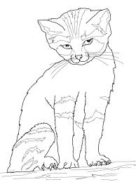 Innovative Cat Coloring Sheets Gallery Colorings Children Design Ideas In The Hat Book Pages Pdf For