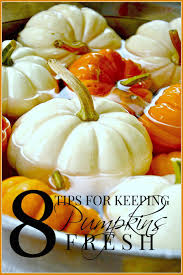 Keep My Pumpkin From Rotting by 8 Tips For Keeping Pumpkins Fresh