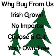 Christmas Tree Saplings Ireland by Our Christmas Trees