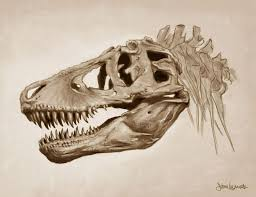 Fuckyeahdinoart T Rex Skull Illustrated In Photoshop See More At Womackart
