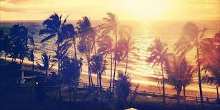 California Tumblr Photography Palm Trees Sunset Beautiful Specs Price