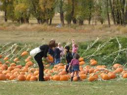 Colorado Pumpkin Patch Farm Camp by Fun In The Vail Valley Pumpkin Patch Vaildaily Com