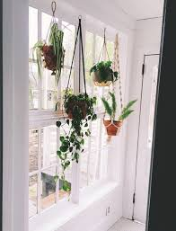 Plants In Bathroom Images by Best 25 Living Room Plants Decor Ideas On Pinterest Indoor