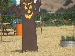 San Jose Pumpkin Patch 2017 by Spina Farms Pumpkin Patch Morgan Hill Ca Picture Of Spina