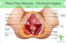 pelvic floor muscle spasm 100 images the vital information