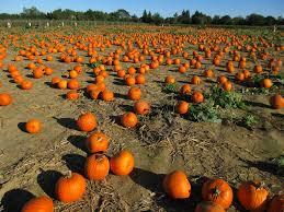 Pumpkin Patch Long Island Ny by The World U0027s Best Photos Of Halloween And Halloweenpumpkin Flickr