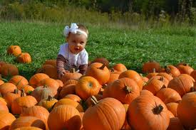Best Pumpkin Patches In Cincinnati by Our Delicious Life 2015