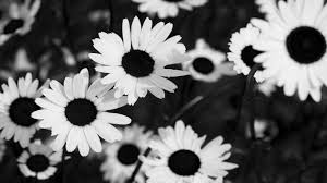 Black And White Flowers Background Tumblr