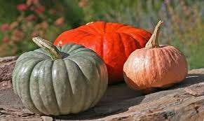 Pumpkin Patch Near Nolensville Tn by The Top 10 Things To Do Near Arrington Vineyards Tripadvisor