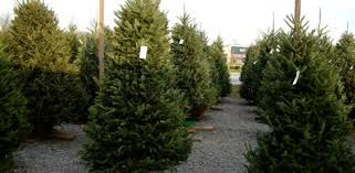 Christmas Tree Has Aphids by Tis The Season For Ticks Today U0027s Homeowner