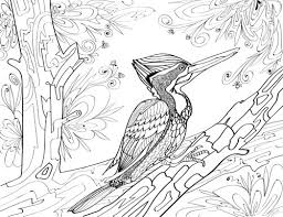 Crimson Backed Woodpecker Adult Coloring Page