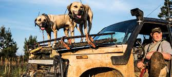 Hog Hunting Dogs   Outdoor Life Hot Dog Of A Food Truck Pays Off For Monroe Fatherson Duo Driver In Arizona Forgets Leashed To Famous Dog Ramp For Truck Ideas Bravasdogs Home Blog The Best Is It Legal Put The Back Pickup Treat East Greenbush Albany Ny Mugzys Barkery Traveling With Your Pet This Holiday Part 4 Mckinney Animal Driving Lorry Stock Photos Images Alamy Crate Pickup N Treats Free Window Cute Canine Transportation Waiting Love Like A Truckin Farmer And Near Photo Getty Why You Shouldnt Let Your Ride Back One