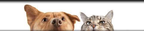 cat dental care cat feline dental care vet dentist oshkosh glendale greenfield
