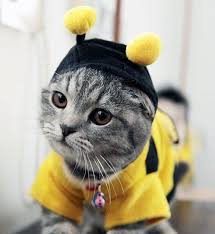 cat batman costume 28 costumes for cats that will put a smile on your