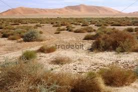Dry Semi Desert Landscape In Front Of The Sand Dunes Erg Muzuruq Sahara
