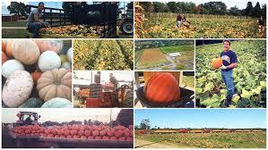 Pumpkin Patch In Long Island New York by Hank U0027s Pumpkintown In Water Mill Ny