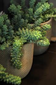 entretien plante grasse d interieur plantes grasses symphonie florale juvignac montpellier