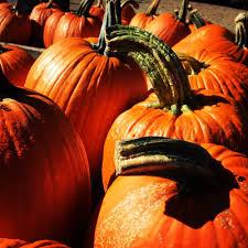 Pumpkin Picking Nyc 2014 by Dr Davies Farm Stand 51 Photos U0026 32 Reviews Farmers Market