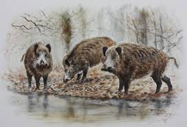 Powell Ohio Pumpkin Patch by Dominique Pizon Sus Scrofa Drawing Pinterest Wildlife Art