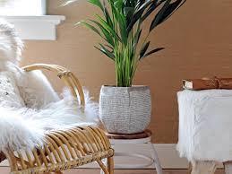 zimmerpflanzen für faule dieses grün braucht wenig pflege