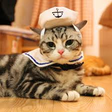 costume for cat sailor costume for cats adjustable luvurcats