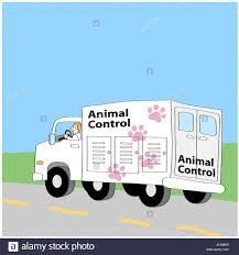 Dog Catcher Stock Photos & Dog Catcher Stock Images - Alamy Built Animal Control Trucks For Two Different Counties There May Visalia Police Search Suspect Who Stole City Animal Control Truck Bodies Trivan Body 2011 Dodge Ram 2500hd Crew Cab Pickup Truck City Of Bozeman Law Enforcement On Chevy Colorado 4x4 By New Icon Isometric 3d Style Royalty Free Cliparts Marion County Services Bb Graphics The Wrap Cordele Georgia Crisp Watermelon Restaurant Attorney Bank Hospital Diecast Hobbist 1976 B100 Van Removes Dogs Rats And Snakes From Smithfield Home Wjar