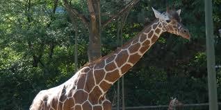 zoo fauverie du mont faron toulon visite agenda de toulon