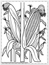Corn Color Page 16 Coloring Pages Printable