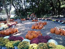 Pumpkin Patches In Milton Wv by Find Corn Mazes In Masaryktown Florida Harvestmoon Farm In