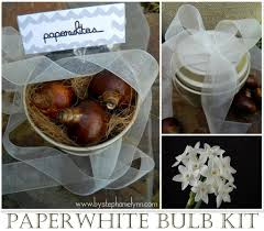paperwhite bulb gift giving growing kit with printables forcing