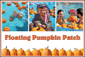 Pumpkin Patch College Station 2017 by Floating Pumpkin Patch At The Vacaville Pool Your Town Monthly